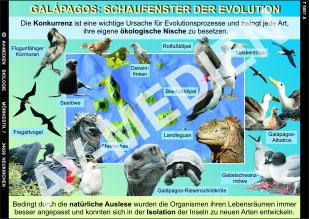 DVD: Galápagos - Schaufenster der Evolution