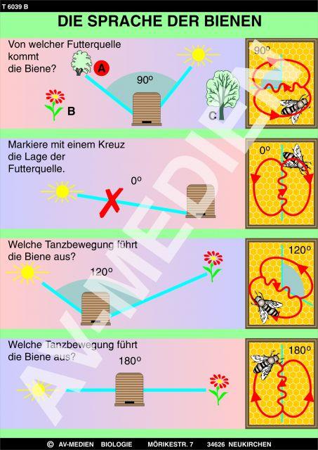 Biologie: overheadfolien