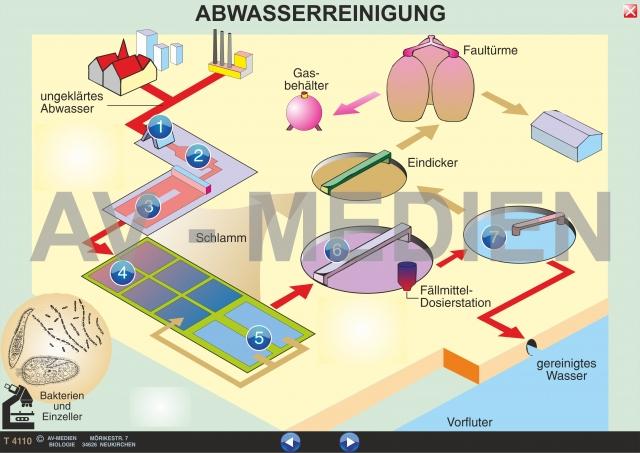 Biologie interaktive digitale tafelbilder