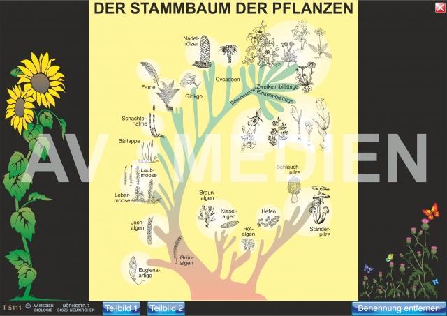 der stammbaum der tiere und pflanzen av medien onlineshop. Black Bedroom Furniture Sets. Home Design Ideas
